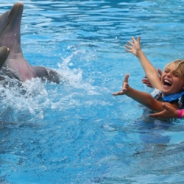 Dolphin Encounter Maroma