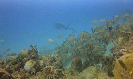 Discovery Scuba Diving at Maroma Adventures