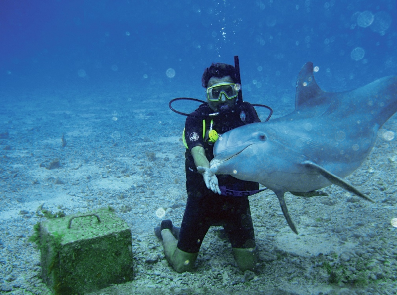 Dive With Dolphins (Dolphin Discovery)