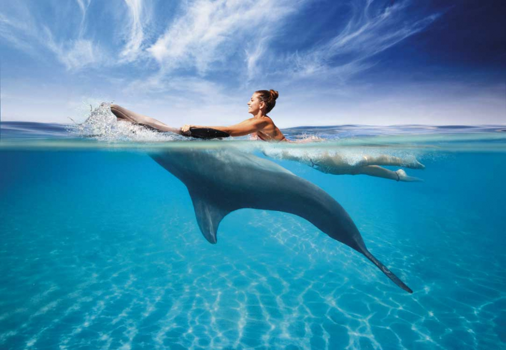 Cozumel Swim With Dolphins Tours