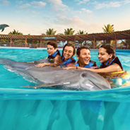 Dolphin Cat Royal Swim en Maroma Adventures