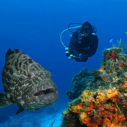 Referral Dives at Maroma Adventures