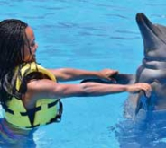 Dolphin Interaction Adventure