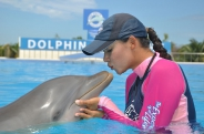 Dolphin Cat Encounter en Maroma Adventures