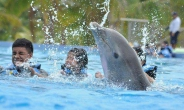 Dolphin Cat Swim Adventure en Maroma Adventures