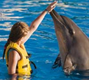 Dolphin Swim and Ride / Cozumel