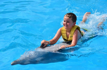 Dolphin Swim Speed Ride