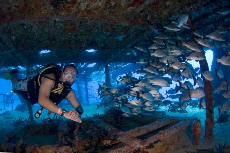 Two-Tank Dive in Cancun (certified divers only)