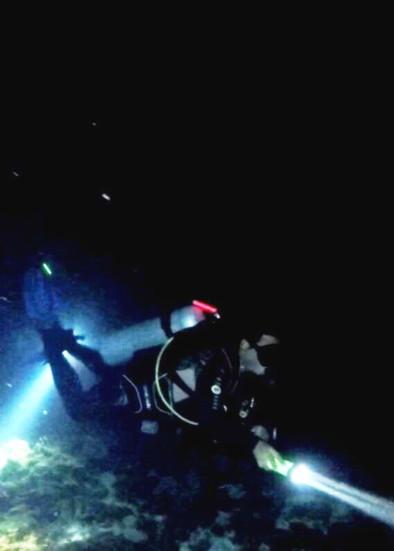 The Night Dive (Scuba Cancun)