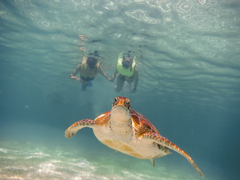 Snorkel Discovery (Tortugas & Cenote)