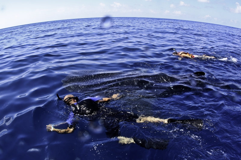 Whale Shark Explorer (Ocean Tours)