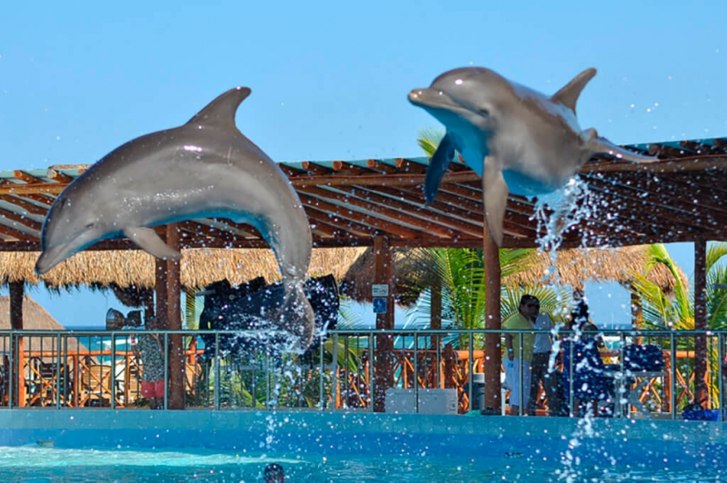 Maroma Catamaran + Dolphin Encounter