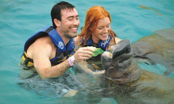 Manatee Encounter (Cozumel)