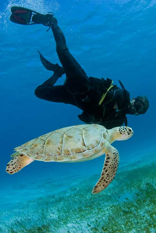 PADI Open Water Course (Scuba Cancun)